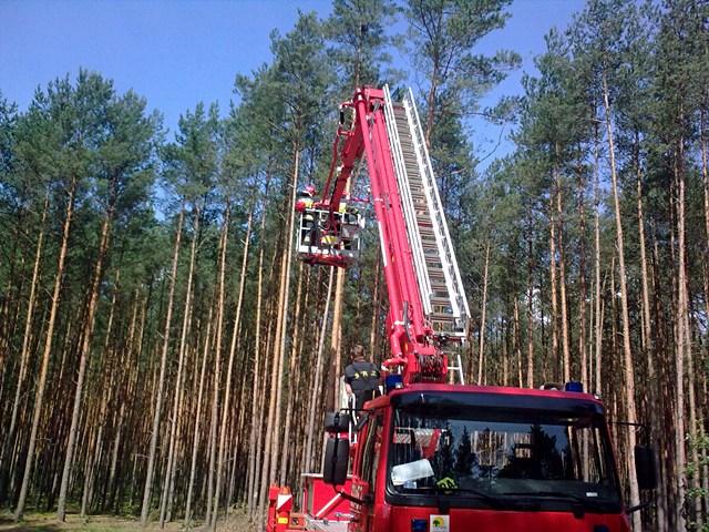 Wlazł na drzewo, zejść nie dał rady  - Fot. Jakub Antczak