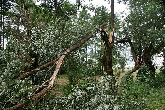 Złamane drzewa uszkodziły dom