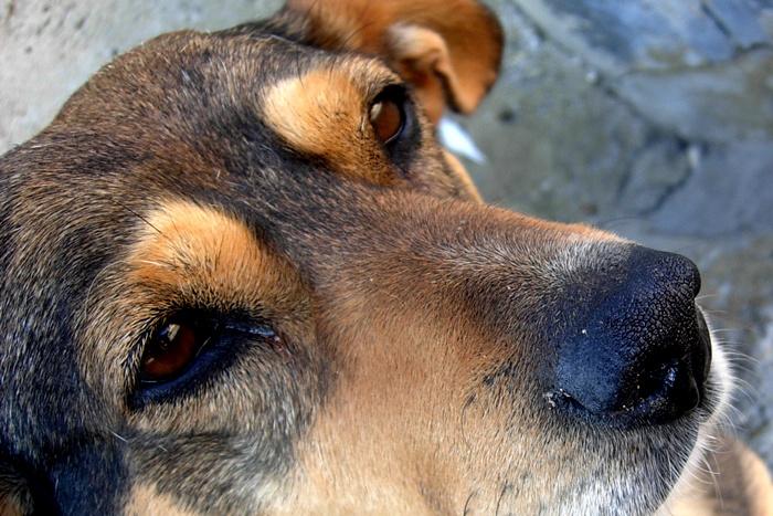 Strażacy ratowali psa - Źródło: sxc.hu / diego medrano