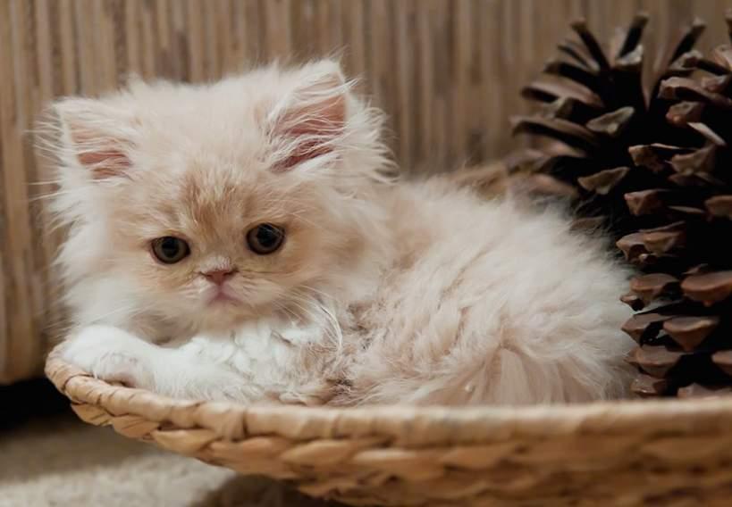 Masz kota na punkcie... kotów? Pochwal się swoim mruczkiem! - Foto: sxc.hu