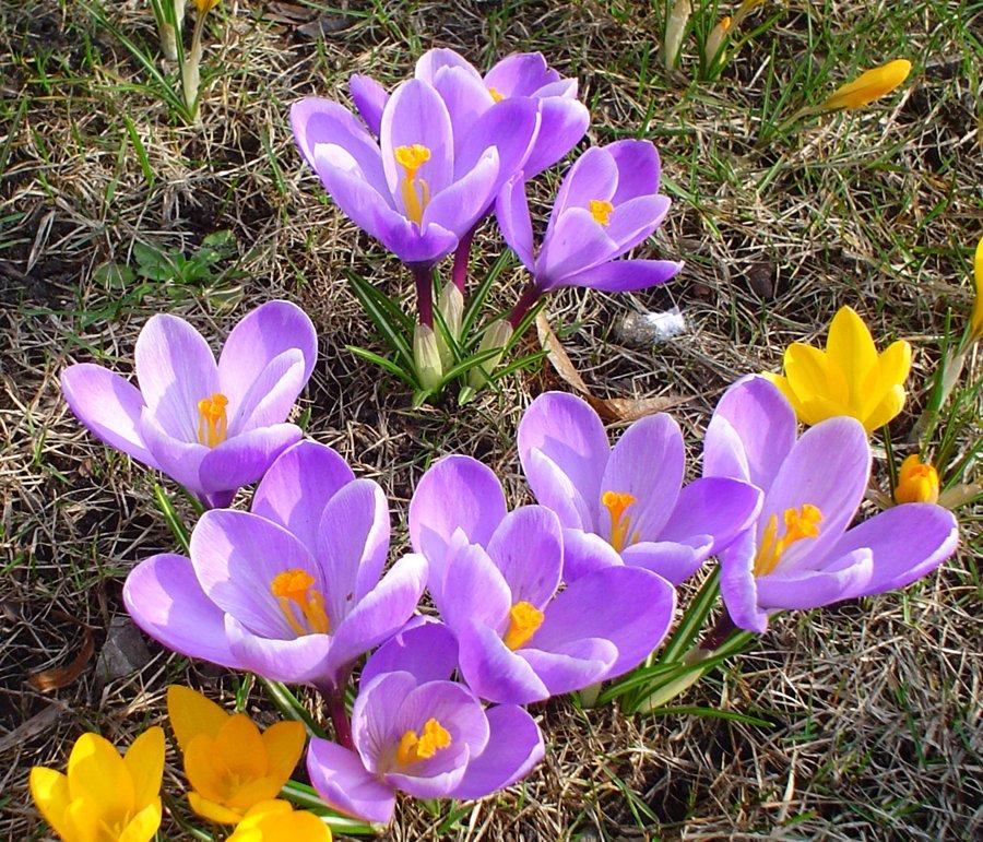Widzisz pierwsze oznaki wiosny? Podziel się nimi! - Turek.net.pl