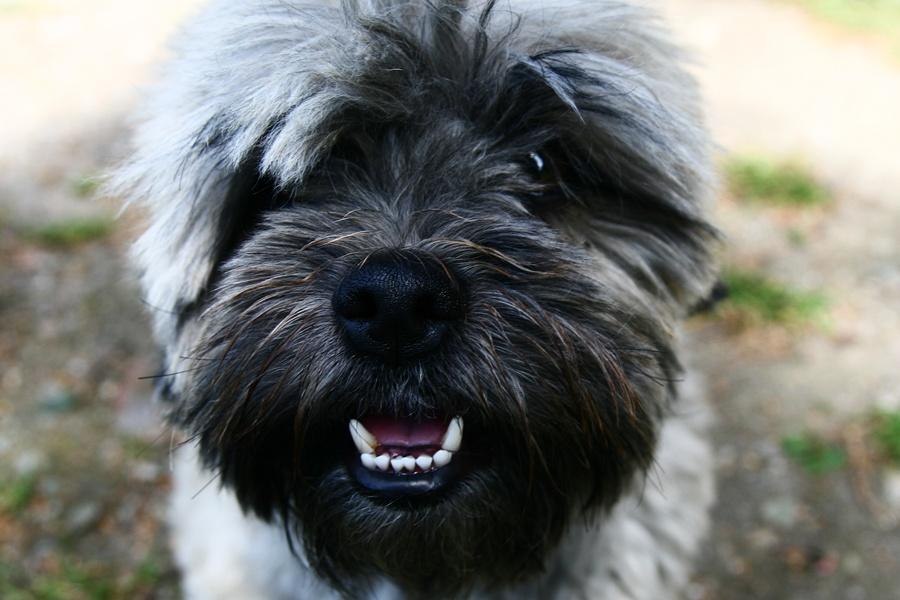 Zwierzaki w opałach - nie zostawiaj psa w aucie! - Foto: sxc.hu / Paolo Gadler