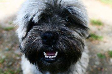 Zwierzaki w opałach - nie zostawiaj psa w aucie!