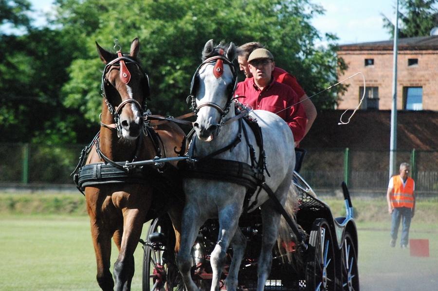 Piękne konie królowały w Tuliszkowie - Foto: ma