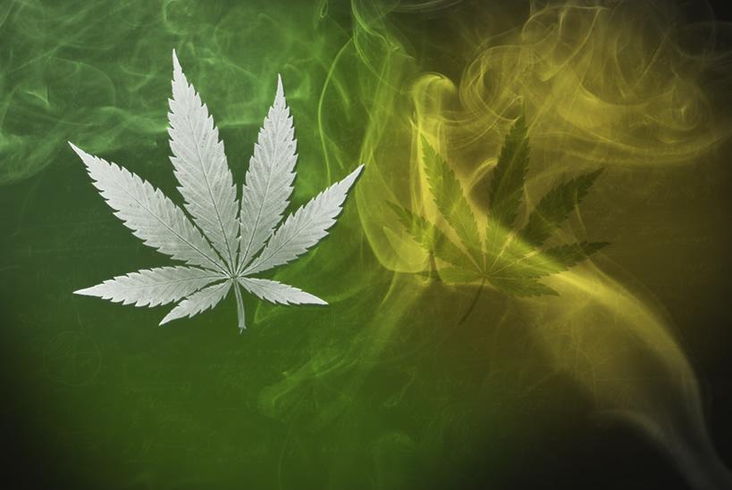 Zlikwidowali pod Turkiem plantację marihuany