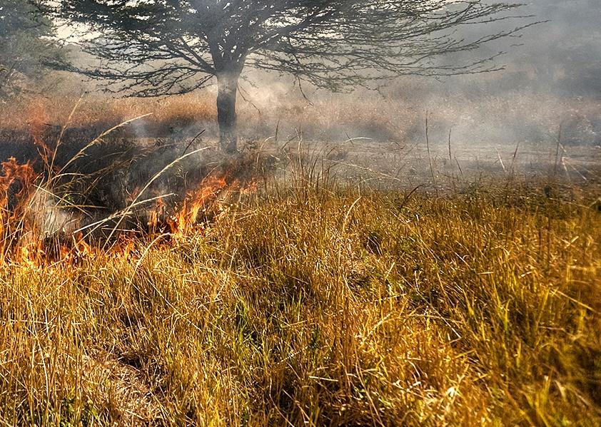 Pożar nieużytków w Nowym Świecie - Foto: sxc.hu / Gavin Fordham