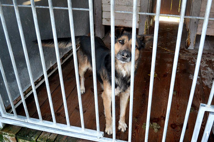 Wideo: Nie kupuj - adoptuj! - foto: M. Derucki