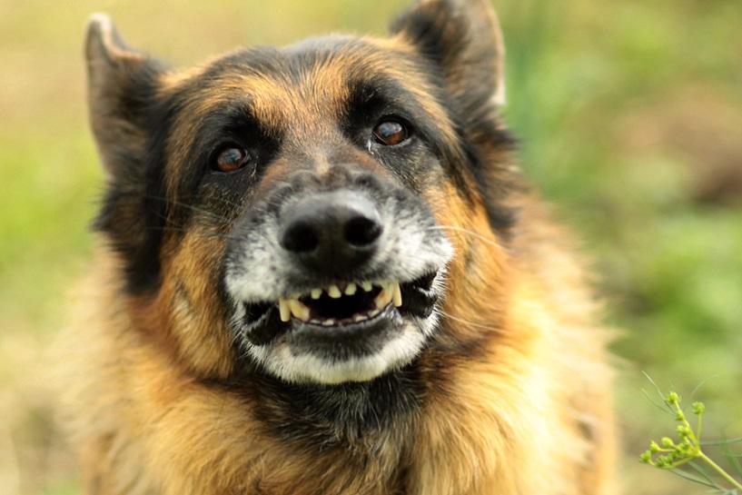 Pies dopadł biegaczkę. Gryzł plecy, wyszarpał tkankę z nogi - foto: freeimages.com / Andrzej Pobiedziński