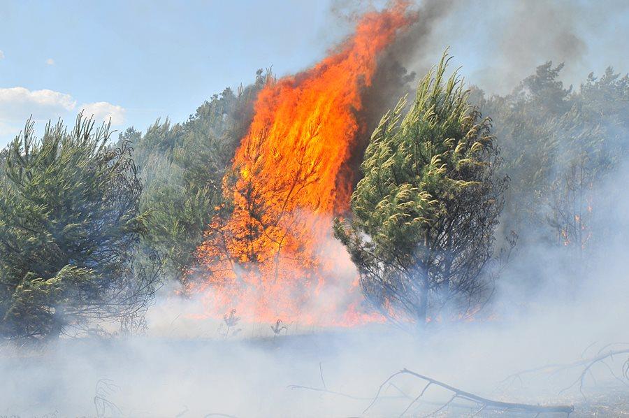 Wideo: Środa pełna pożarów. Strażacy gasili lasy w gm. Przykona i Tuliszków