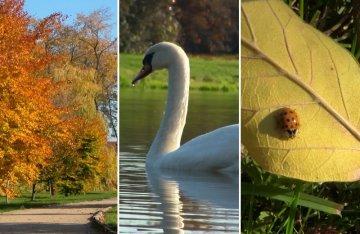 Wideo: Złota polska jesień w parku miejskim