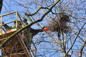 Wideo: Niszczą ptasie gniazda w parku, by...
