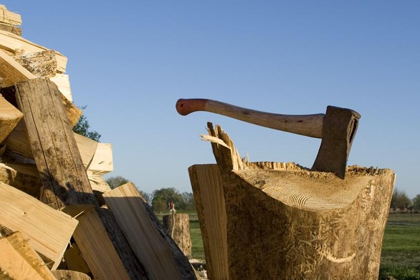 Zatrzymany sprawca kradzieży drzewa - foto: freeimages.com / Hans Thoursie