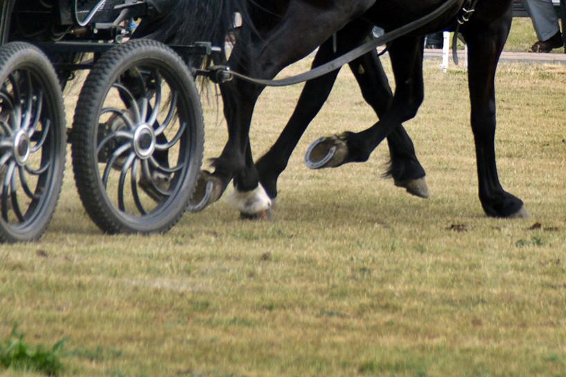 Kawęczyn: Wypadek na zawodach konnych. Wpadł pod kopyta i koła powozu