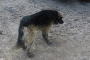 Górnicy uratowali niewidomego psa