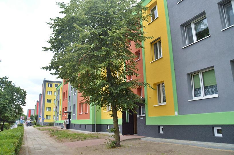 Mieszkańcy Wyszyńskiego 2 chcą wycinki. Drzewa są potrzebne, ale nie tuż przy oknie