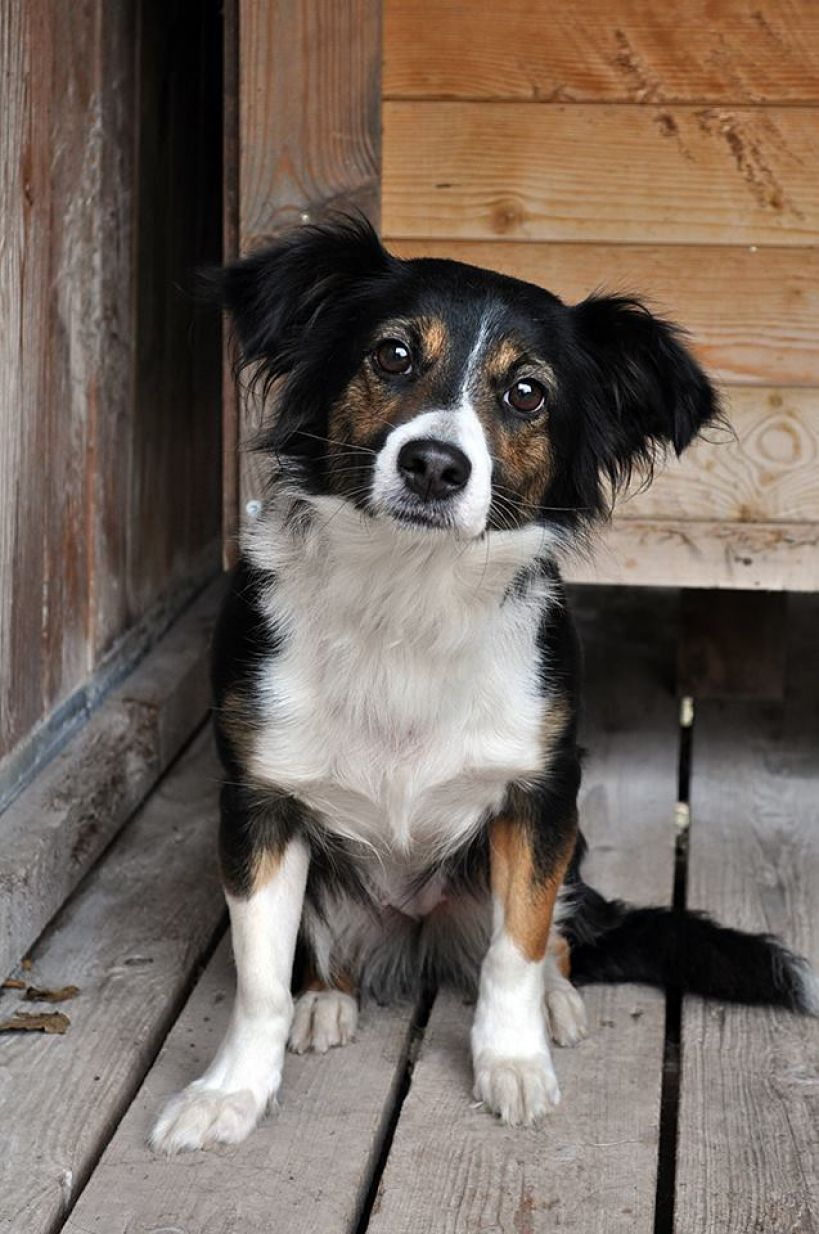 1,5-roczna Luna szuka domu
