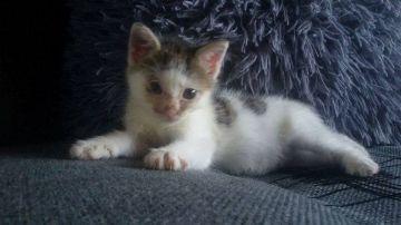 Kokos - bardzo chory kociak