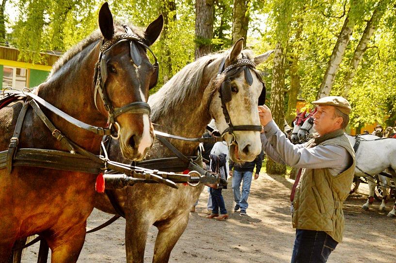 Dobra: Paradą zaprzęgów konnych otworzyli sezon jeździecki  - foto: Arkadiusz Wszędybył
