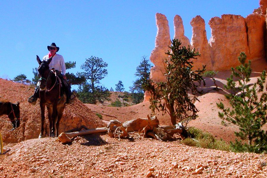 Noc Muzeów: Tej nocy każdy zostanie kowbojem! - foto: freeimages.com / Kristin Smith