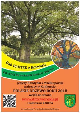 Głosujemy na Drzewo Roku i Bartka z Kotwasic