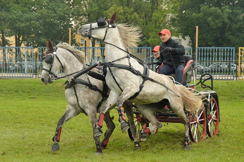 Turek: Konie znów zawitają na OSiRze