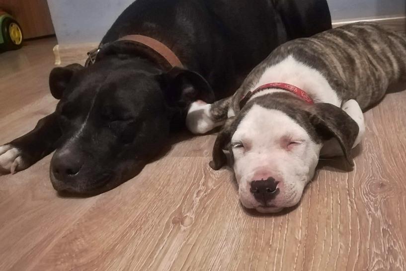 Mariantów: Zaginęły psy. Poszukiwania trwają - foto: archiwum prywatne Czytelniczki
