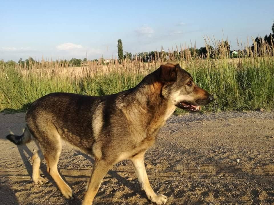 Apel Czytelniczki o pomoc w odnalezieniu psa - foto: Zdjęcie nadesłane