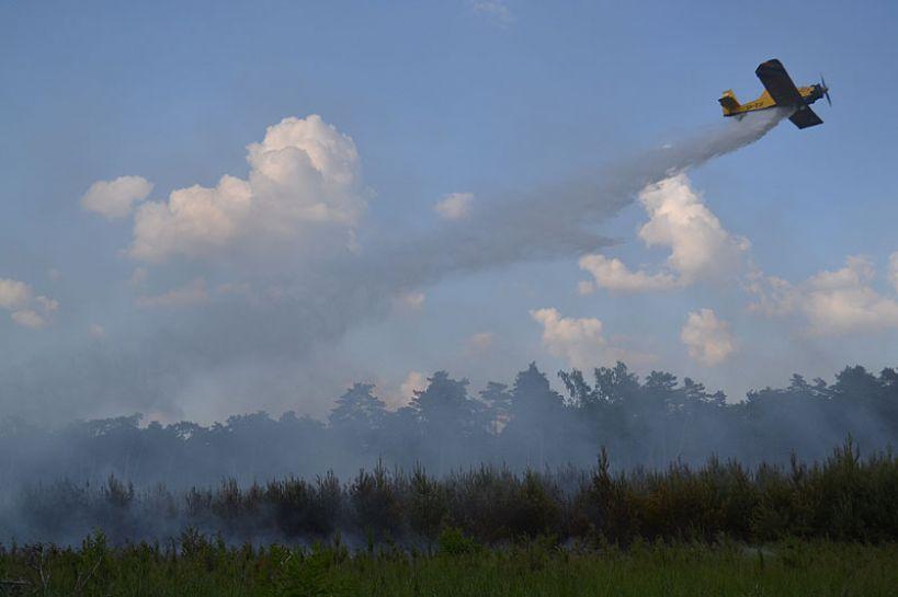 Wideo: Pożar młodego lasu w m. Dąbrowa. Las gasi 11 zastępów straży pożarnej oraz samolot