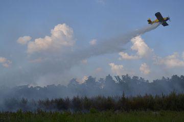 Wideo: Pożar młodego lasu w m. Dąbrowa. Las...