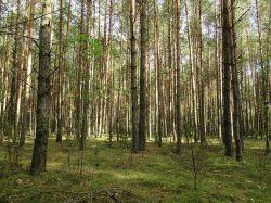 Bezwzględny zakaz wstępu do lasów.  Zaostrzenie przepisów nie...