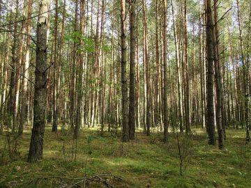 Bezwzględny zakaz wstępu do lasów.  Zaostrzenie...