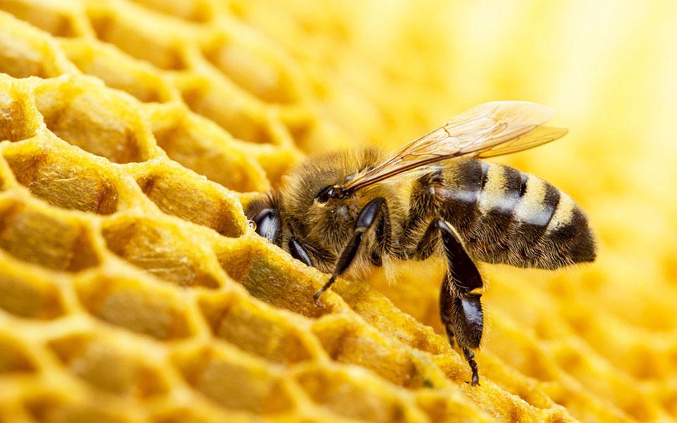 Gmina Dobra przyjacielem pszczół