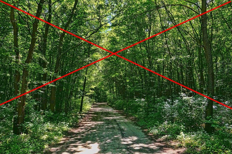 Okresowy zakaz wstępu do lasów na wyznaczonych terenach