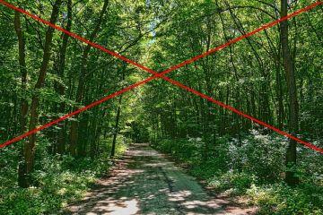 Okresowy zakaz wstępu do lasów na wyznaczonych...
