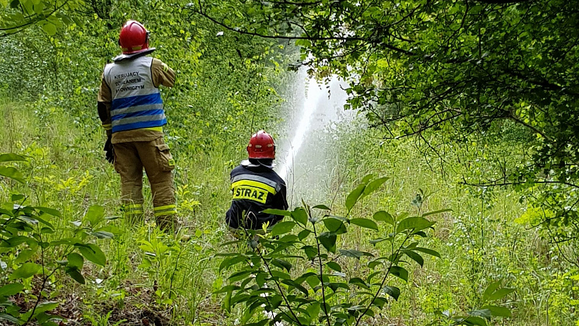 Ćwiczenia strażaków we współpracy z Nadleśnictwem Turek