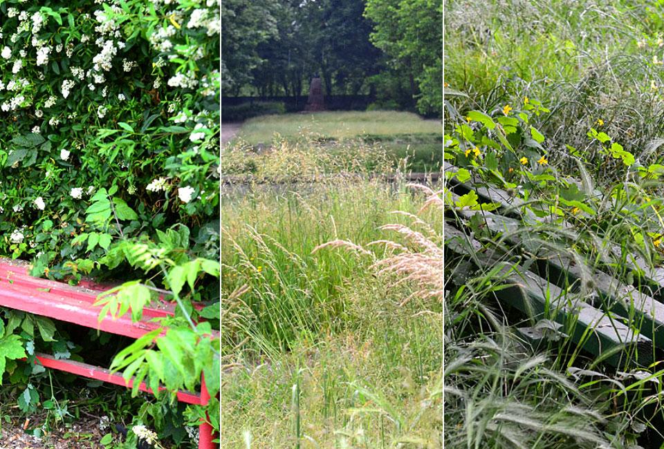Park Miejski to istna dżungla. Zarośnięty i zaniedbany. Dlaczego?