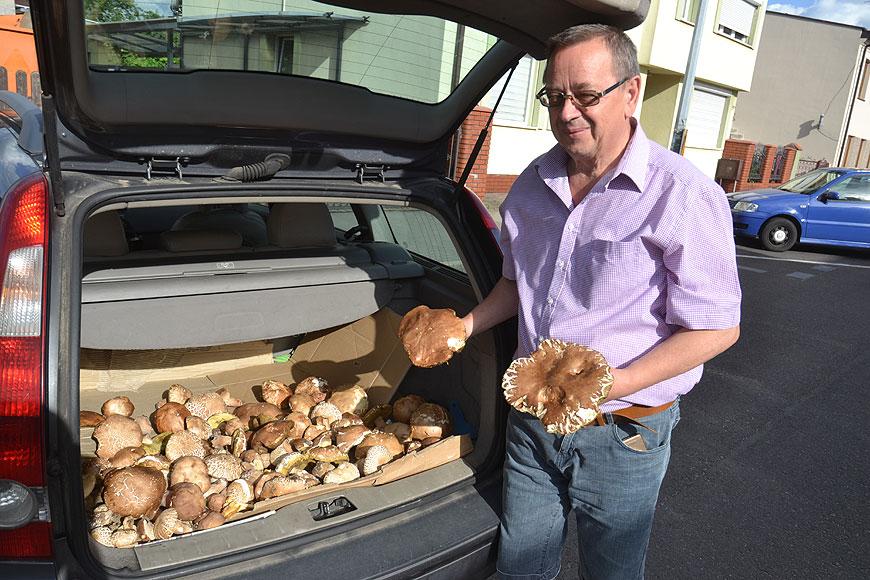 Sezon grzybobrań otwarty. Krótki spacer i blisko 8 kg grzybów okazałych rozmiarów.