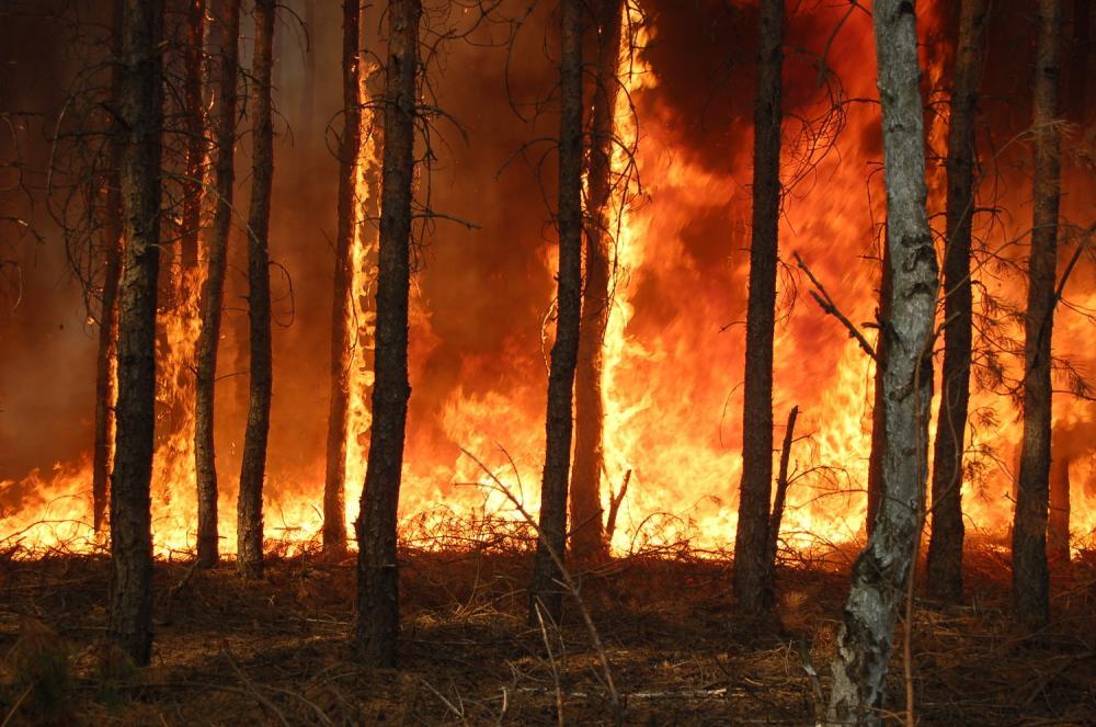 Na ratunek nadleśnictwu - leśny numer interwencyjny