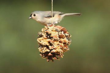 OTOP: Szyszki - stołówka dla ptaków