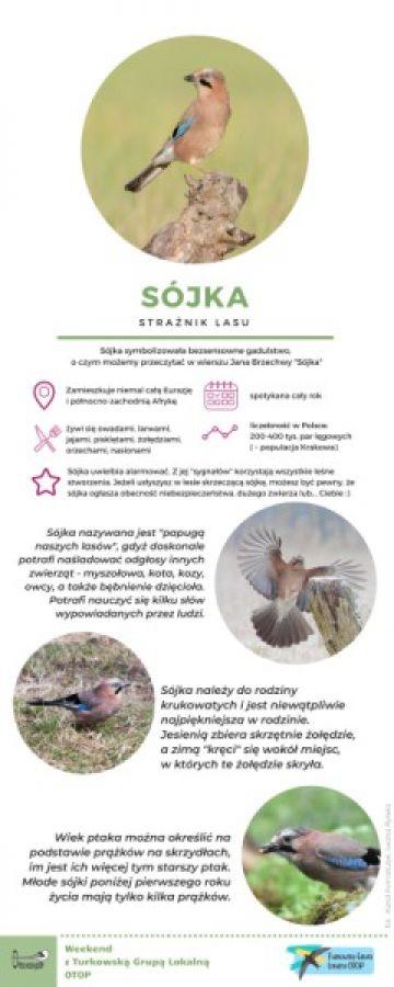 OTOP: Sójka - strażnik lasu