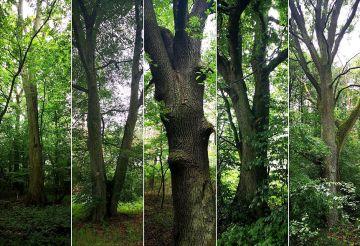 Lasy Nadleśnictwa Turek bogatsze o pięć nowych...