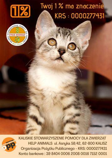 1% lokalnie: Wspieraj zwierzaki, wspieraj Help Animals Turek