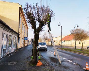 Wiosenny przegląd i pielęgnacja ulicznego drzewostanu