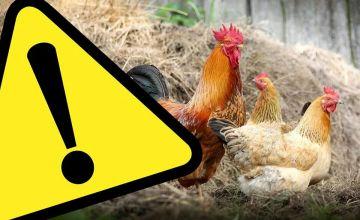 Dwie gminy powiatu tureckiego zagrożone ptasią...