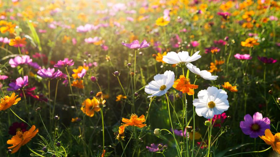 Weekend z OTOP: Łąka kwietna i dziki ogród - dlaczego warto?
