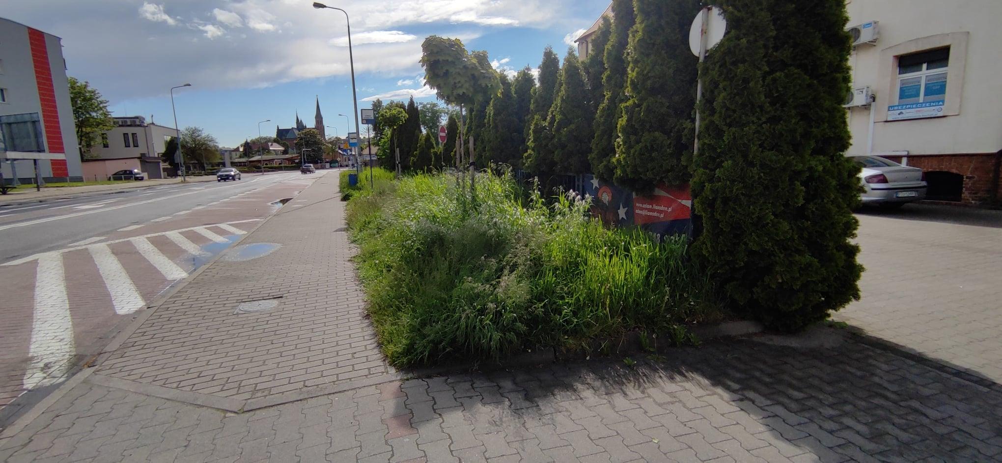 Listy do redakcji: Niekoszona trawa przy drogach powiatowych