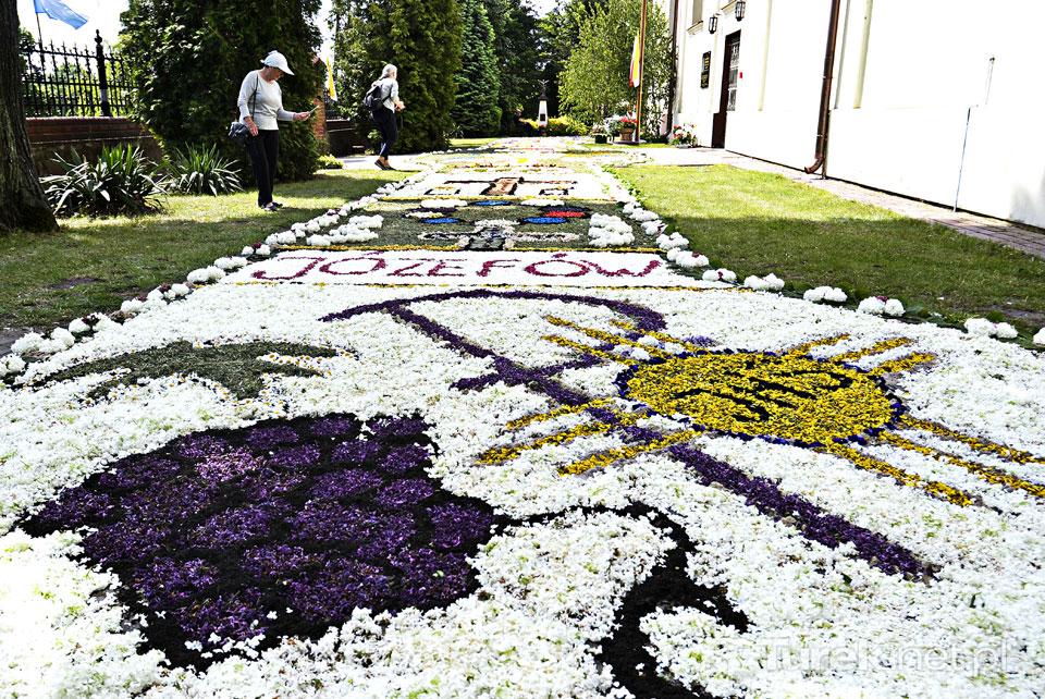 Gm. Dobra: Tradycyjne kwiatowe kobierce ułożone. Skęczniew gotowy na procesję